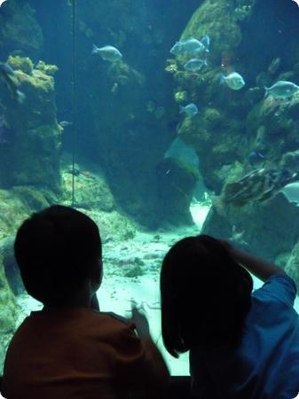 Aquarium at the California Academy of Sciences in San Francisco