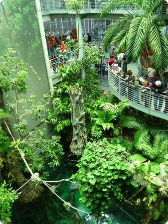 Rainforest Habitat at the California Academy of Sciences in San Francisco
