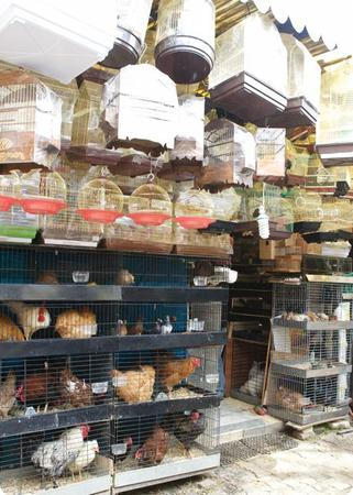 Chickens for sale outside of Istanbul's Spice Bazaar