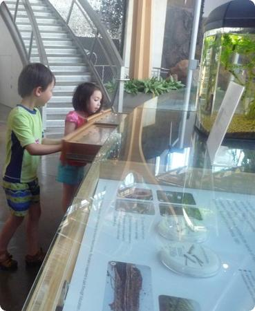 The kids loved these drawers, each of which contains bones, shells, or other artifacts from local animals