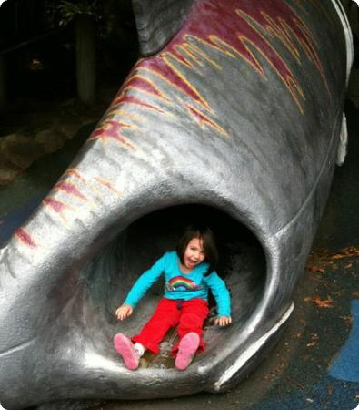 Salmon slide at Carkeek Park in Seattle