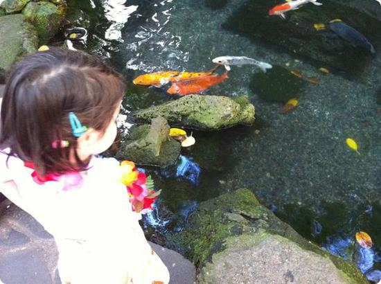 Darya checks out the koi at the International Market Place in Honolulu