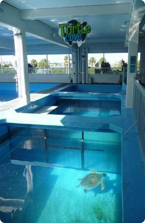 Sea Turtles at the Clearwater Marine Aquarium