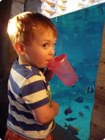 """A Toddler's Eye View of """"Rainbow Reef,""""  Aulani's Snorkel Lagoon"""