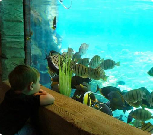Eilan is mesmerized as fish swarm to eat their morning lettuce in Rainbow Reef