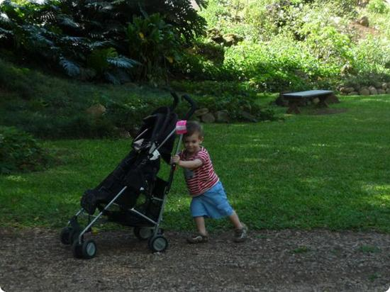 Eilan pushes his stroller through the lush and shady Waimea Valley