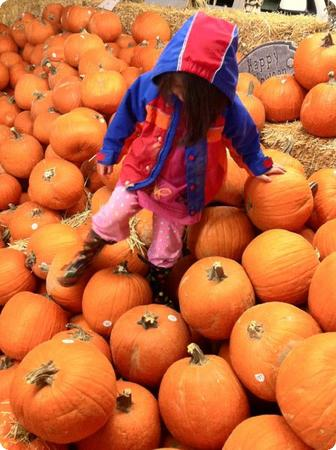 Darya explores the pumpkin patch