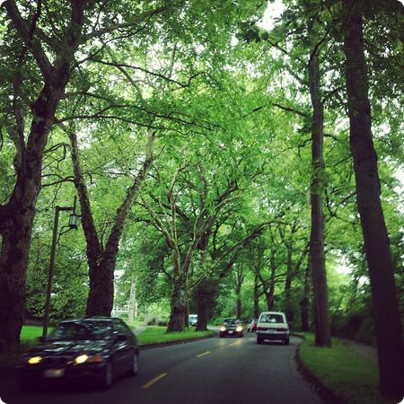 Traffic Jam in the Arboretum... There's a reason Seattle is called the Emerald City